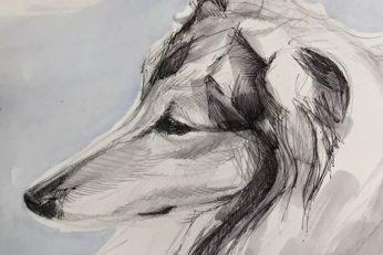 dog_commission