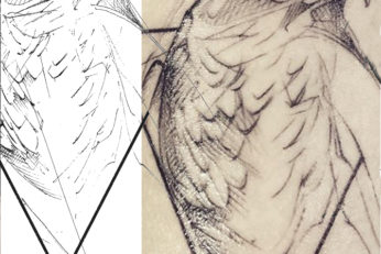buzzard sketch tattoo
